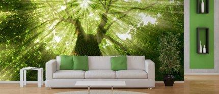 Fototapeta las w salonie
